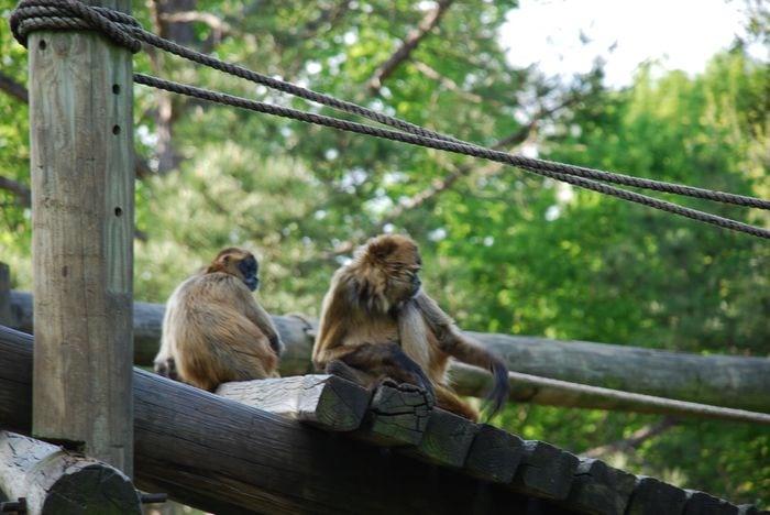 Montgomery Z00, Montgomery, Alabama- monkeys