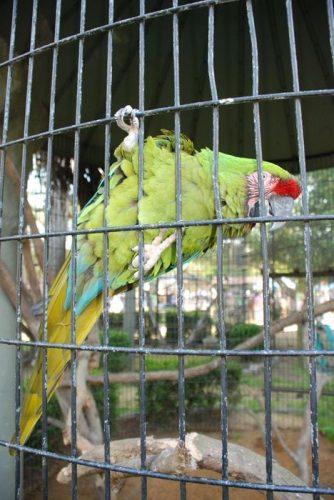 Montgomery Z00, Montgomery, Alabama-Parakeet