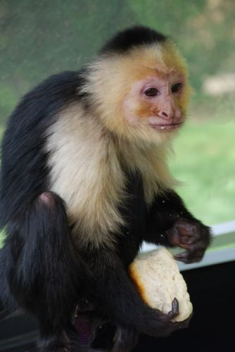 Montgomery Z00, Montgomery, Alabama- monkey eating a roll
