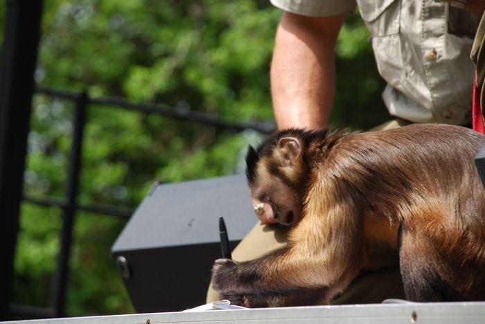 Montgomery Z00, Montgomery, Alabama- monkey writing