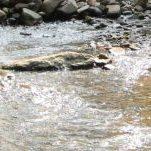 Alabama Creek and River Gold Rush Prospecting