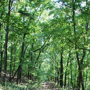 alabama-hiking-trails